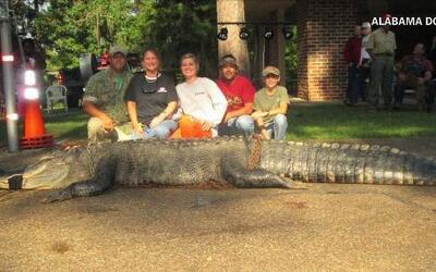 Cazan al cocodrilo más grande hasta el momento de Alabama