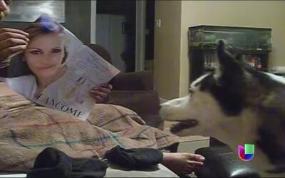 Un perro huye de Julia Roberts y una bebé hace ejercicio con su papá