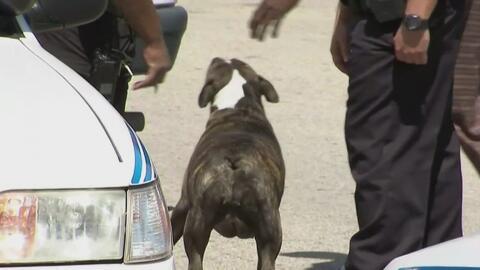 Niña de 15 meses se recupera de las heridas provocadas por un perro pitb...