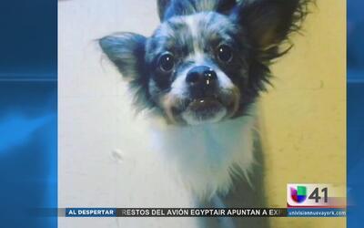 Niño hispano de El Bronx pide ayuda para encontrar a su mascota
