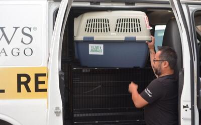 Un equipo de veterinarios y voluntarios va camino a Luisiana para rescat...