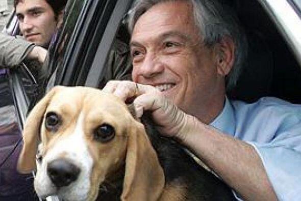 El presidente chileno Sebastian Piñera tiene un perro beagle llamado Bol...