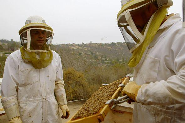 En el colmenar de Scott Tenney, el doctor Juan encontró abejas af...
