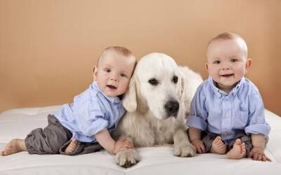 Esto sucede porque al estar en contacto con un canino, un niño estará ex...