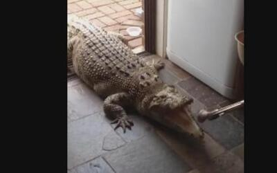 Te atreverías a alimentar a Jilfia, la 'mascota' que espera su comida en...