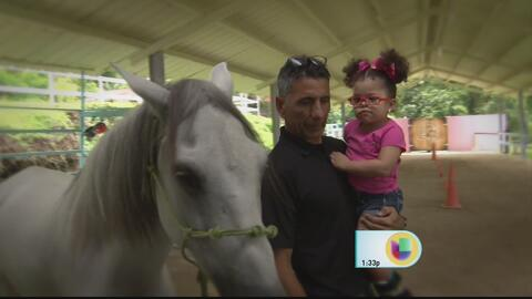 Un remanso en Gurabo para la terapia alternativa con caballos