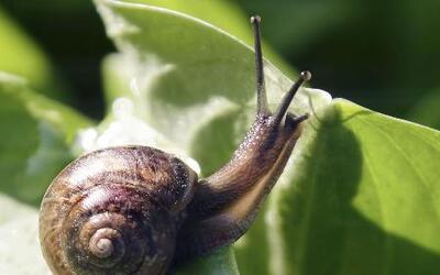 Descubre los tipos de plaga de temporada que existen en las plantas