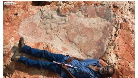 La inmensa huella de un saurópodo de 1.7 metros comparada con un...