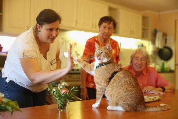 Eva está convencida totalmente de que los gatos son de gran ayuda para r...