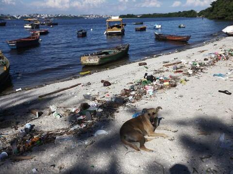 Un perro se sienta a lo largo de la costa de las aguas contaminadas de l...