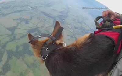 Perros paracaidistas son un ejemplo de dedicación y valentía en Colombia