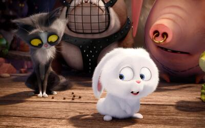 'The Secret Life of Pets': pequeño accidente