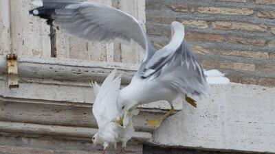 Palomas de la paz liberadas por el Papa y dos niños sufren ataque por ot...