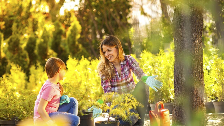 ¡No permitas que las bajas temperaturas destruyan tu jardín!