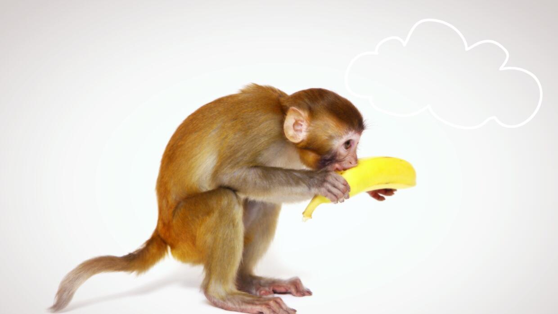 Mono y plátano