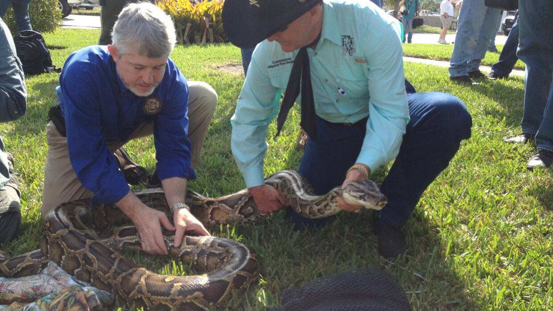 El director del reto de la caza de pitones Nick Wiley y el comisionado B...