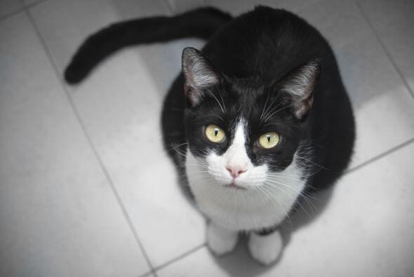 El día del gato es una iniciativa que se conmemora desde el 2009 los día...