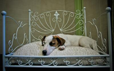 Hoteles 'pet friendly' en San Francisco