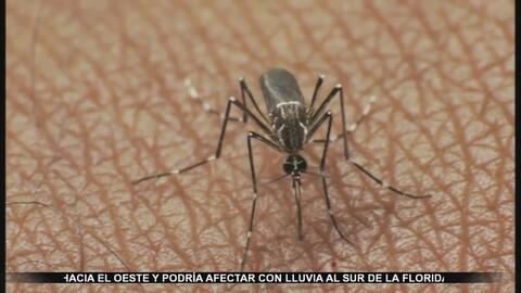 Mitos y realidades sobre el virus del Zika