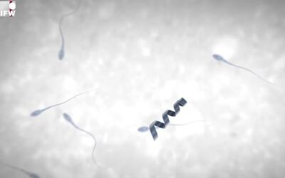 Científicos desarrollan el 'Spermbot', un nanorrobot para ayudar a los e...