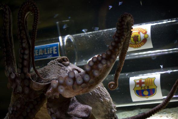 El pulpo 'Iker' tuvo la chance de elegir al ganador del partido.