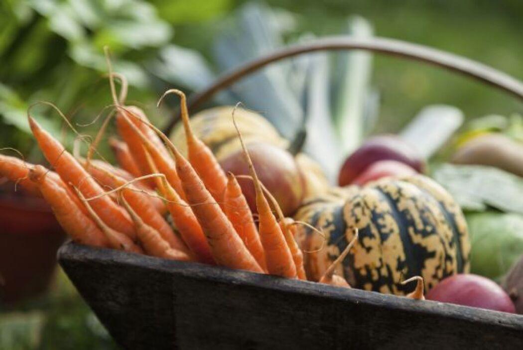 También se puede agregar zanahoria, melón y calabaza a su dieta, pues co...