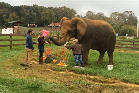 Pero Ian no tenía el anillo en sus manos, fue el elefante &eacute...