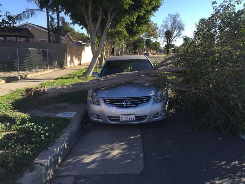 Árbol caído  sobre un vehículo en Lynwood, CA