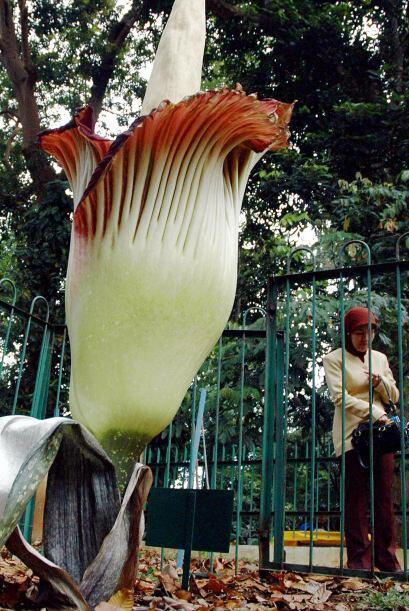 El botánico que la cultivó, Eduardo Gonçalves, del...