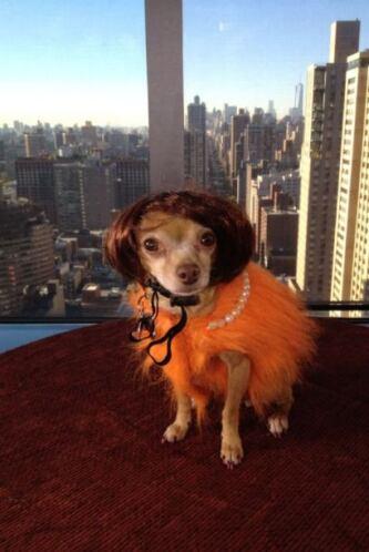 Honey se confundió por un momento y se vistió como señorita parisina en...