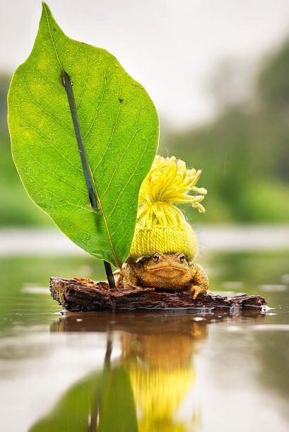¿Qué les parece esta rana? En Alemania le hicieron una pequeña balsa la...