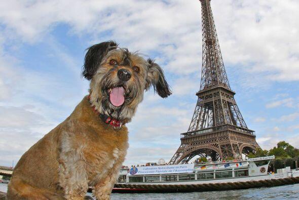 Oscar estuvo en lugares hermosos. Aquí lo  vemos en París,...