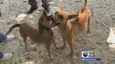 Le buscan hogar a dos 'perritos balseros'
