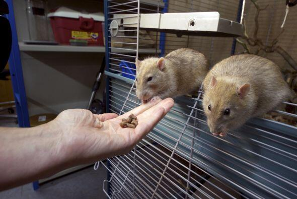 Ellas también tienen un increíble olfato; algunas especies incluso detec...