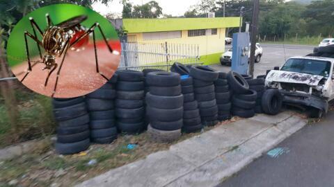 Gomas y el virus del Zika