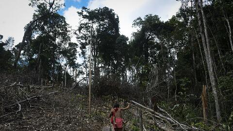 Amazonas venezolano