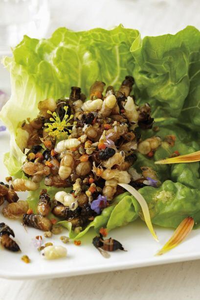 ¡Bug appétit! sería la nueva frase para decir ¡provecho! al momento de c...