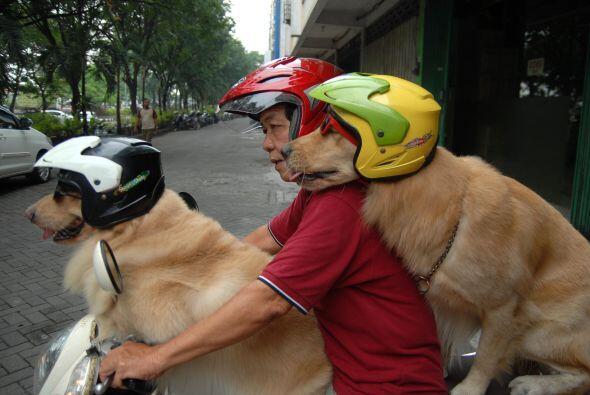 ¡Desde muy pequeños están acostumbrados a la maquinaria de la moto!