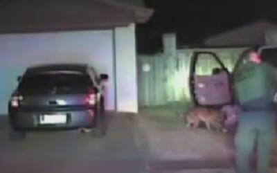 Perro de la policía ayuda a someter a un conductor que evadía su arresto...
