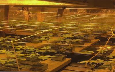 Autoridades confiscan más de 50 libras de marihuana en El Bronx