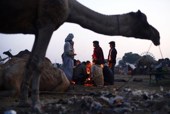 En los festivales, los camélidos son los grandes protagonistas, y las no...