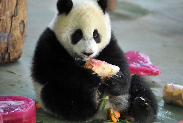 Con estas frutas y un pastel muy especial festejó su primer año de vida.
