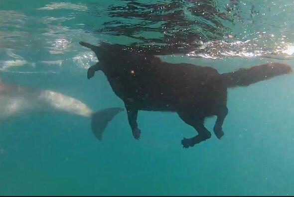 Pero probó que sabe nadar a la perfección y sin ning&uacut...