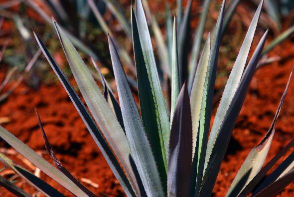 ¡Feliz Día del Tequila!  Este 24 de julio celebramos el Día Internaciona...