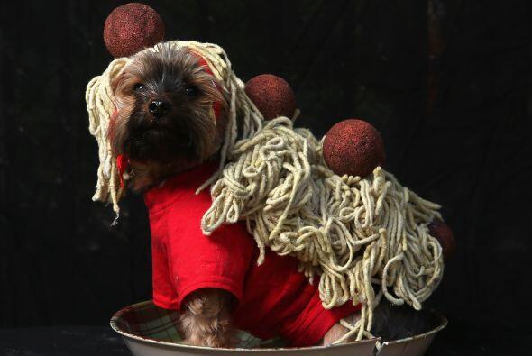Que tal este espagueti a la boloñesa, seguro tu mascota no pasará desape...