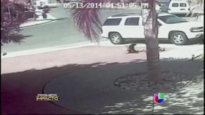 Una gatita rescató a un niño de las fauces de un perro