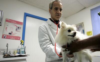 ¿Cuáles son las ventajas de adquirir un servicio médico para sus mascotas?