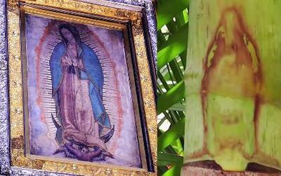 Descubren una imagen de la Virgen de Guadalupe en una palmera en México