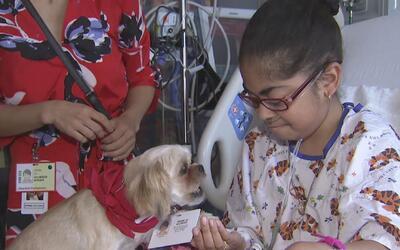 Entrenan mascotas para que en hospitales ayuden a los enfermos