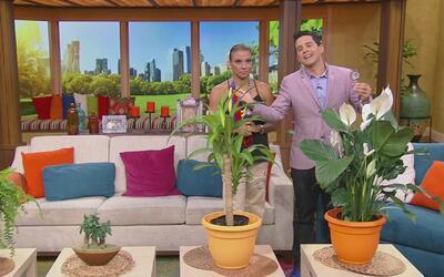 Cambia la energía de tu casa poniendo estas plantas en tu hogar